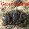 Gobar Badshah kaa Kamaal Hindi Story गोबर बादशाह का कमाल हिंदी कहानी