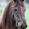एक बूढ़े घोड़े की कहानी Story of Being Positive in Hindi