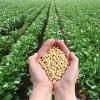 Soyabean Health Benefits in Hindi