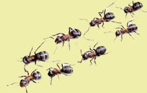 आलस्य पर काबू कैसे पाएं चींटियों से पांच चीजें सीखें