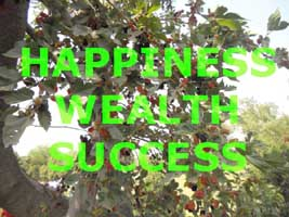 Happiness Wealth Success