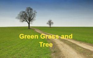 Green Grass aur Tree Hindi Short Story