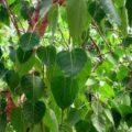 Planting Trees Near House Vastu Tips