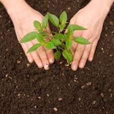 Trees Environment Human Hindi Essay