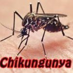 Chikungunya Symptoms Treatment Prevention