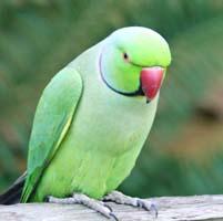 parrot aur chane ka dana hindi story