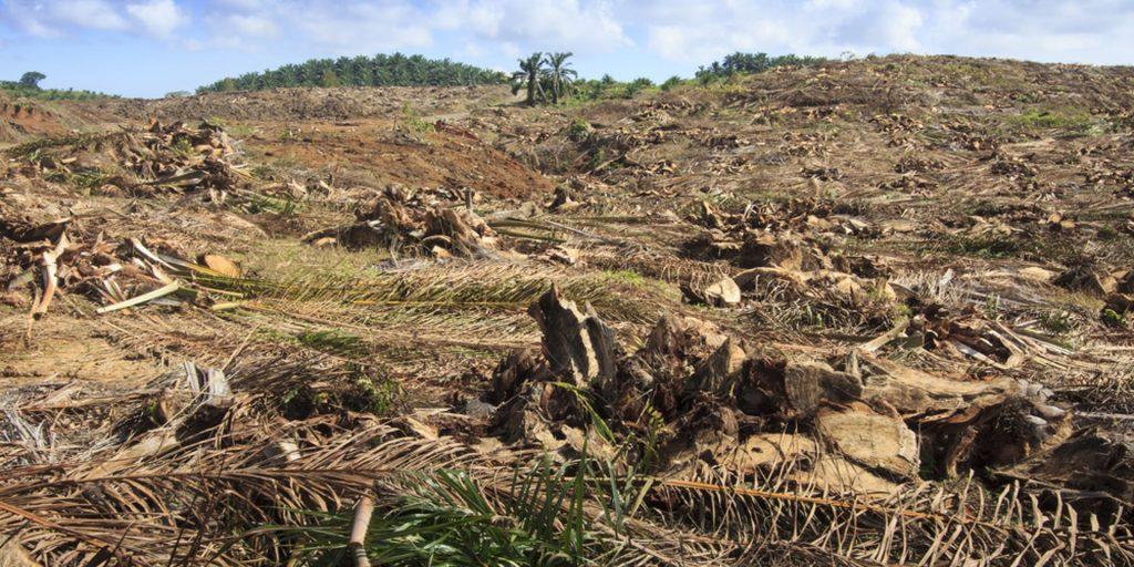 Deforestation for Urbanization Hindi Article