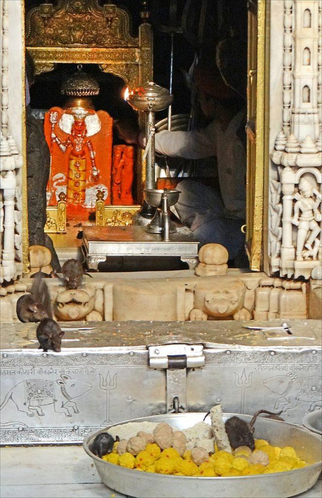 Karni Mata Rat Temple Deshnoke Rajasthan